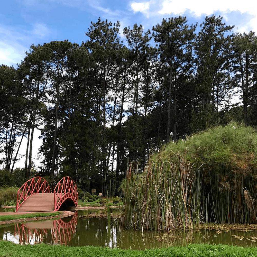 Foto do Jardim Botânico, com um lago e uma pequena ponte e ao fundo árvores altas de dia.